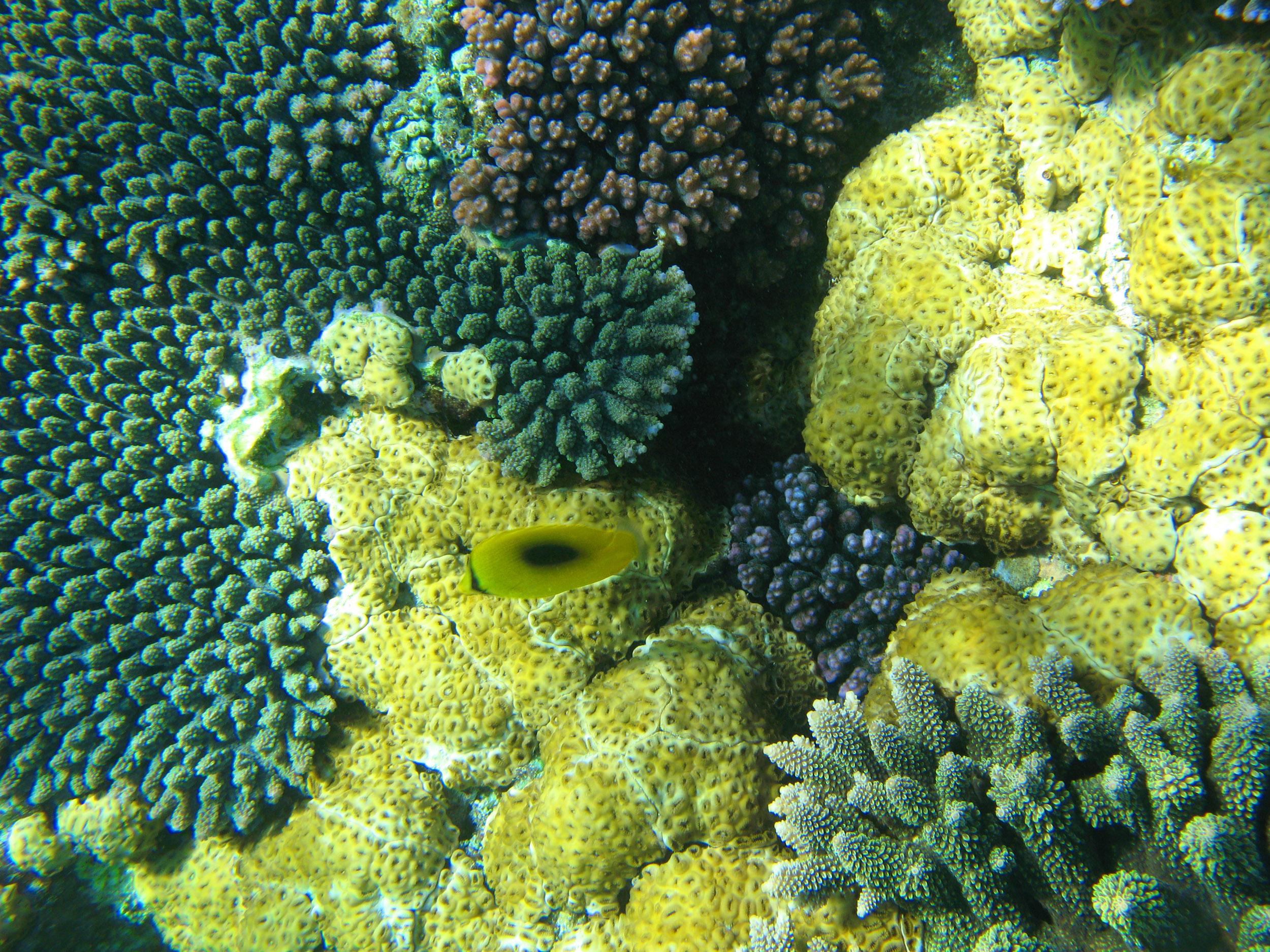 Colorful ocean fish coral