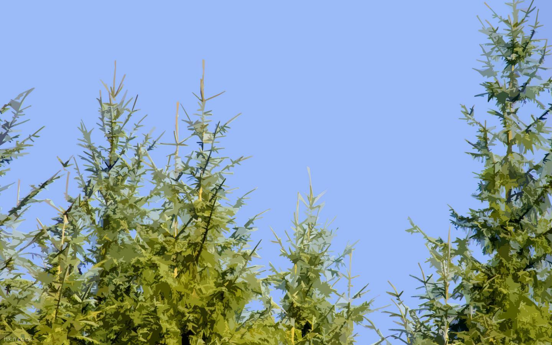 pine tree wallpaper related - photo #9