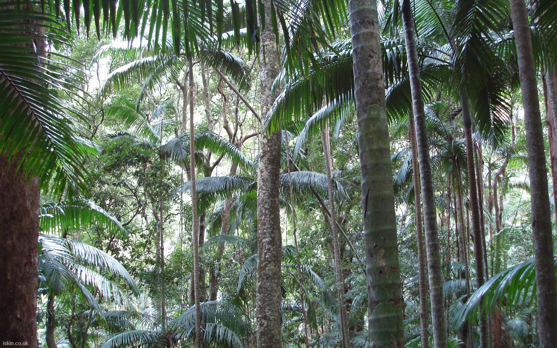 tropical jungle wallpaper - photo #10