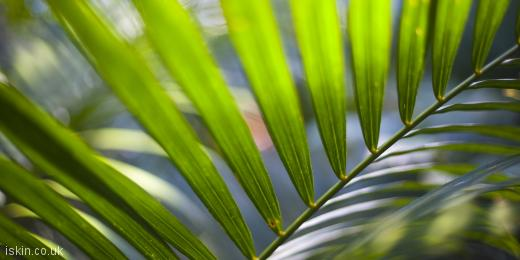 twitter header rainforest fern