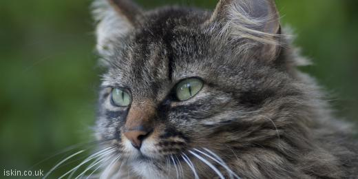 twitter header tabby cat