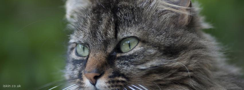 facebook header tabby cat