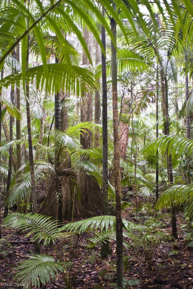 Rainforest Trees Desktop Wallpaper Iskin Co Uk