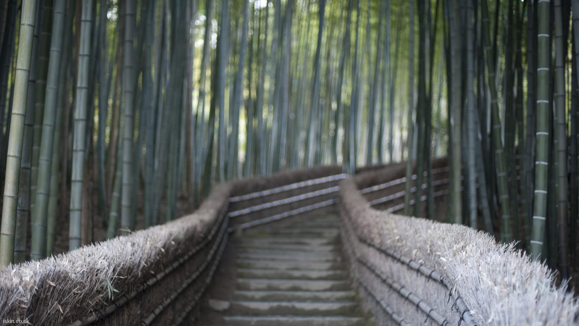 bamboo walkway Desktop Wallpaper